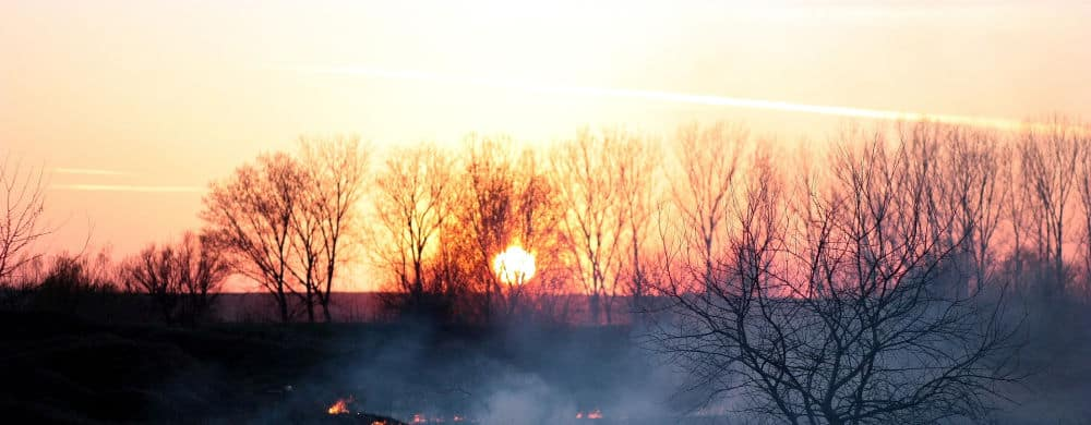 Sunset behind burnt trees